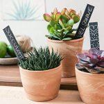 Navaris Set de 10 étiquettes ardoise - pour plantes taille S - Matériel jardinage signets inscriptibles 15 x 2,5cm pour jardin ou balcon avec craie de la marque Navaris image 2 produit