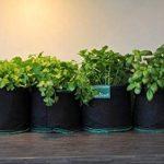 ODYSEED - Kit Prêt à Pousser Herbes aromatiques - 4 Variétés de graines ( Basilic Grand Vert, Persil, Coriandre, Menthe) & 4 SmartsPots 4L + substrat de qualité - Cultivez vos propres herbes - 100% BIO - Origine Européenne. de la marque Odyseed image 3 produit