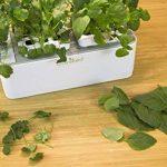 Odyseed - Potager d'Intérieur 100% Bio - Cultivez vos herbes aromatiques - Basilic Cannelle et Citron Inclus de la marque odyseed image 1 produit