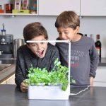 Odyseed - Potager d'Intérieur 100% Bio - Cultivez vos herbes aromatiques - Basilic Cannelle et Citron Inclus de la marque odyseed image 2 produit
