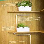 Odyseed - Potager d'Intérieur 100% Bio - Cultivez vos herbes aromatiques - Basilic Cannelle et Citron Inclus de la marque odyseed image 3 produit