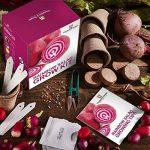 oignons à planter au printemps TOP 5 image 2 produit