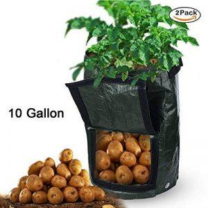 oignons à planter au printemps TOP 6 image 0 produit