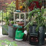 oignons à planter au printemps TOP 6 image 3 produit