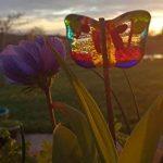oignons à planter au printemps TOP 7 image 2 produit