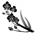 orchidée noir TOP 12 image 2 produit