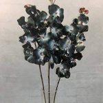orchidée noir TOP 5 image 1 produit