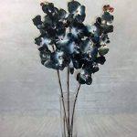 orchidée noir TOP 5 image 2 produit
