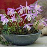 orchidée terrestre TOP 0 image 1 produit