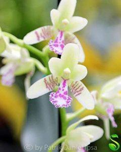 orchidée terrestre TOP 12 image 0 produit