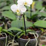 orchidée terrestre TOP 3 image 1 produit