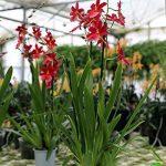 orchidée terrestre TOP 4 image 1 produit