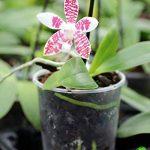 orchidée terrestre TOP 5 image 1 produit