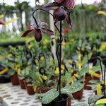 orchidée terrestre TOP 7 image 1 produit