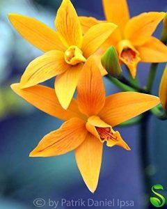 orchidée terrestre TOP 9 image 0 produit