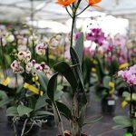 orchidée terrestre TOP 9 image 1 produit