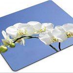 orchidée bleue naturelle TOP 4 image 1 produit