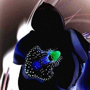 orchidée noir TOP 12 image 0 produit