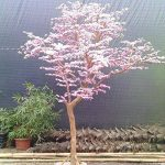 petit arbre japonais bonsaï TOP 3 image 2 produit