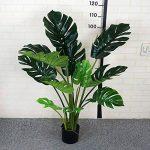 petit arbre japonais bonsaï TOP 7 image 2 produit