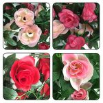 petite couronne de fleurs TOP 9 image 4 produit