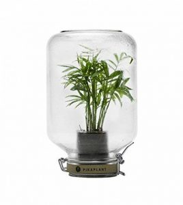 Pikaplant terrarium en verre - Serre autonome Jar/plante d'intérieur Mini palmier inclus - 17x17x28H cm - 2 KG - GARANTIE 3 mois de la marque Pikaplant image 0 produit