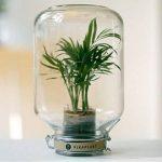 Pikaplant terrarium en verre - Serre autonome Jar/plante d'intérieur Mini palmier inclus - 17x17x28H cm - 2 KG - GARANTIE 3 mois de la marque Pikaplant image 1 produit