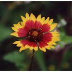 plante couvrante TOP 11 image 1 produit