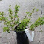 plante couvrante TOP 4 image 1 produit