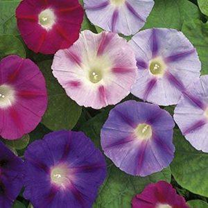plante couvrante TOP 8 image 0 produit