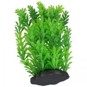 plante graminée haute TOP 1 image 0 produit