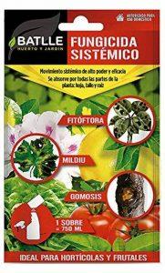 plante graminée haute TOP 2 image 0 produit