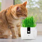 plante graminée haute TOP 8 image 1 produit
