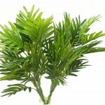 plante intérieur palmier TOP 3 image 1 produit
