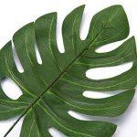 plante intérieur palmier TOP 4 image 2 produit
