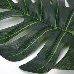 plante intérieur palmier TOP 4 image 3 produit