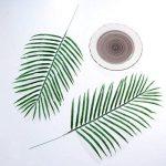 plante intérieur palmier TOP 5 image 1 produit