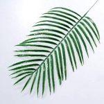 plante intérieur palmier TOP 5 image 3 produit