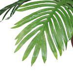 plante intérieur palmier TOP 6 image 3 produit