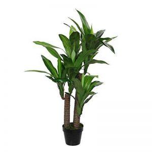 plante verte dracaena TOP 3 image 0 produit