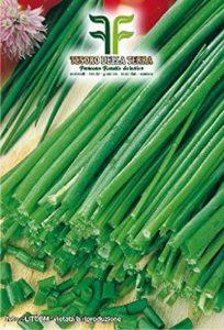 planter ciboulette TOP 10 image 0 produit