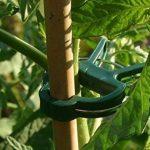 planter les semis de tomates TOP 5 image 1 produit