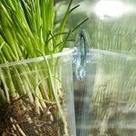plantes aromatiques TOP 8 image 4 produit