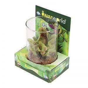 Plantes de marais - Plante trompette latifoliée, dans une serre déco - Sarracenia Hybrid de la marque FloraAtHome image 0 produit