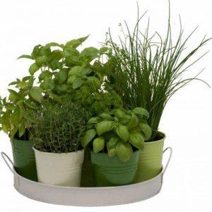 Plateau 7 herbes aromatiques de la marque Florex image 0 produit