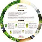 Plateau 7 herbes aromatiques de la marque Florex image 1 produit