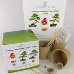 érable bonsaï TOP 1 image 1 produit