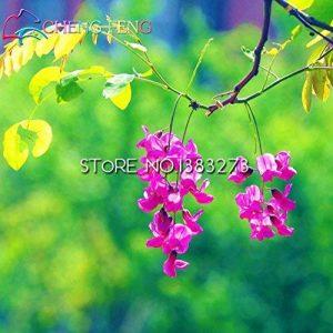Rare graines d'or Mimosa belles graines Acacia Baileyana Jaune Wattle Arbre à fleurs à feuilles persistantes fleurs bonsaï toute l'année ronde 50PCS de la marque Generic image 0 produit