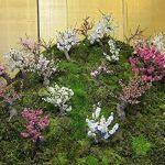 SAFLAX - Kit de culture - Cerisier du Japon - 30 graines - Prunus serulata de la marque SAFLAX image 3 produit