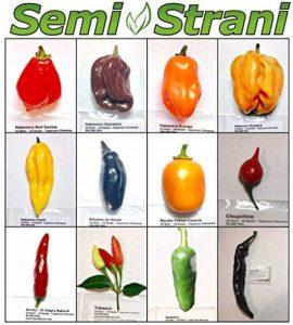 semer dés herbes aromatiques TOP 2 image 0 produit